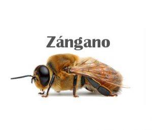 ZANGANO