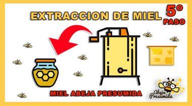 Extracción de la miel 🐝🧡🎥 Abeja Presumida
