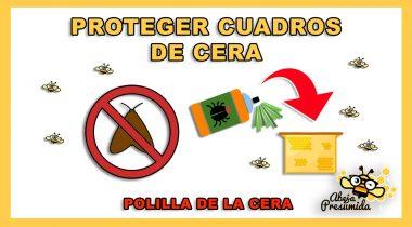 CERAPOL 🐝🧡🎥 Protección contra la Polilla de la Cera
