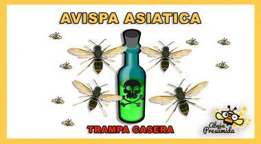 Trampa casera 🐝🧡🎥 contra la Avispa Asiática