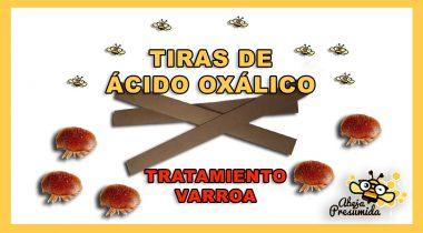 Tiras de Ácido Oxálico 🐝🧡🎥 Tratamiento Varroa
