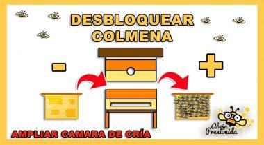 Desbloquear Colmena 🐝🧡🎥 Ampliar cámara de cría