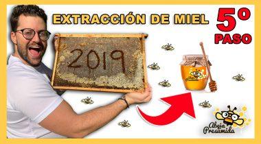 Extracción de Miel