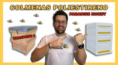 Traspaso Colmena Poliestireno  🐝🧡🎥 Paradise Honey