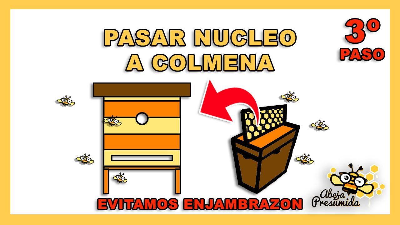 Nucleo Colmena