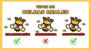 Tipos de Realeras 🐝🧡🎥Celdas Reales